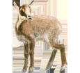 Chamois bébé - robe 69