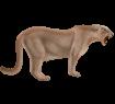 Puma ##STADE## - robe 2